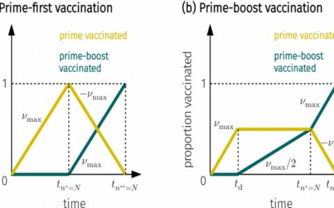 科學家比較COVID-19疫苗接種策略:什麼時候一劑比兩劑好?